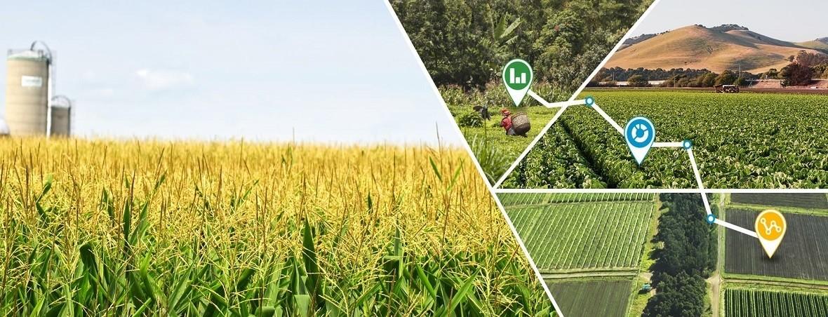 Asigurarea culturilor agricole Transilvania Broker Sibiu